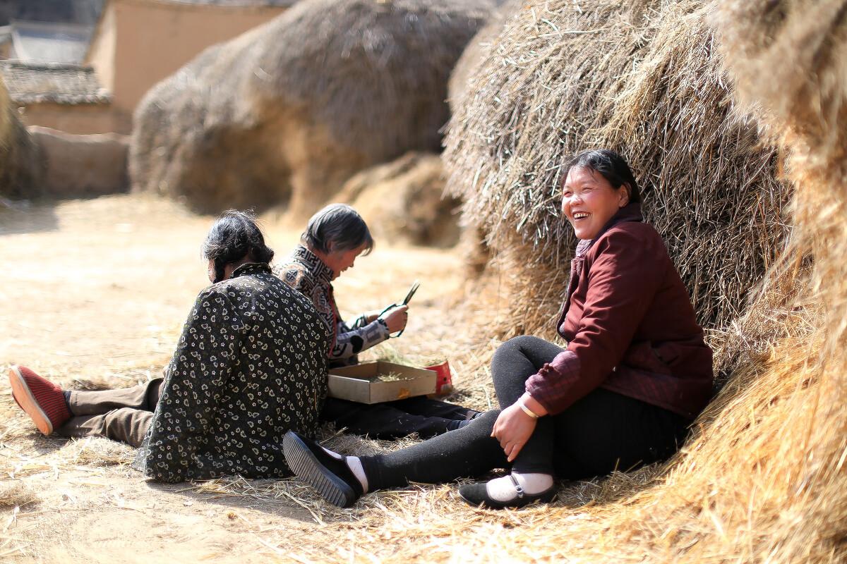 农村大奶草垛性爱_农闲时草垛的阳光下,山村里的人们会拿着活计聊天晒暖暖.