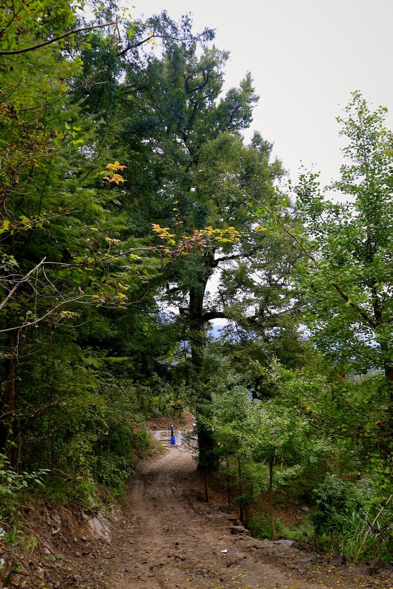 古树流芳茅镬村-风光,v古树-有块巧克力-图虫福州到九里湖自驾游攻略图片