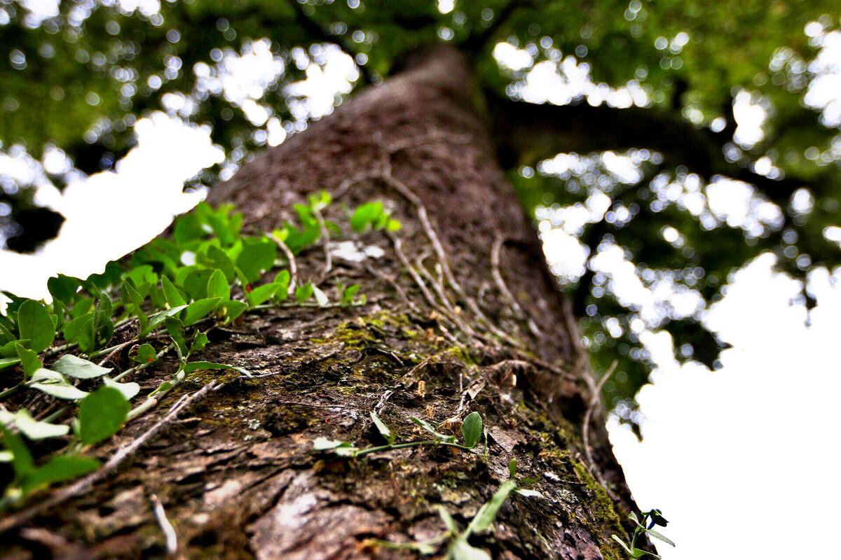 古树流芳茅镬村-攻略,v古树-有块巧克力-图虫芜湖至九江自驾游风光图片