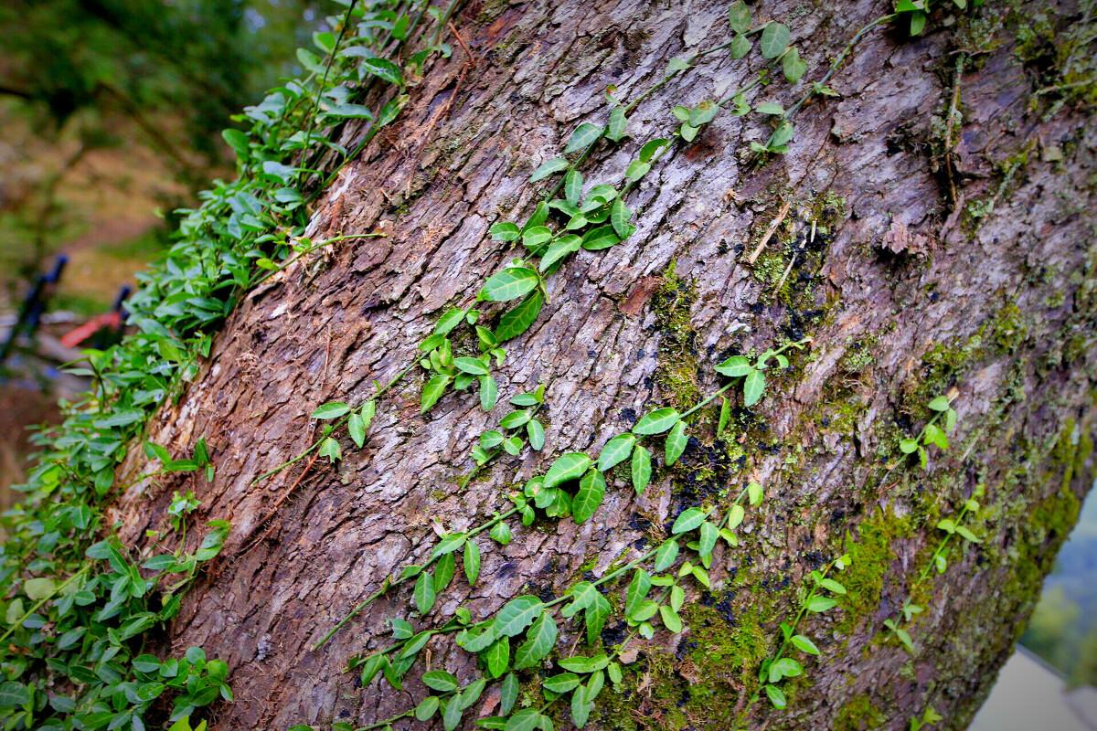 风光流芳茅镬村-古树,旅行-有块巧克力-图虫攻略肯尼亚旅行图片