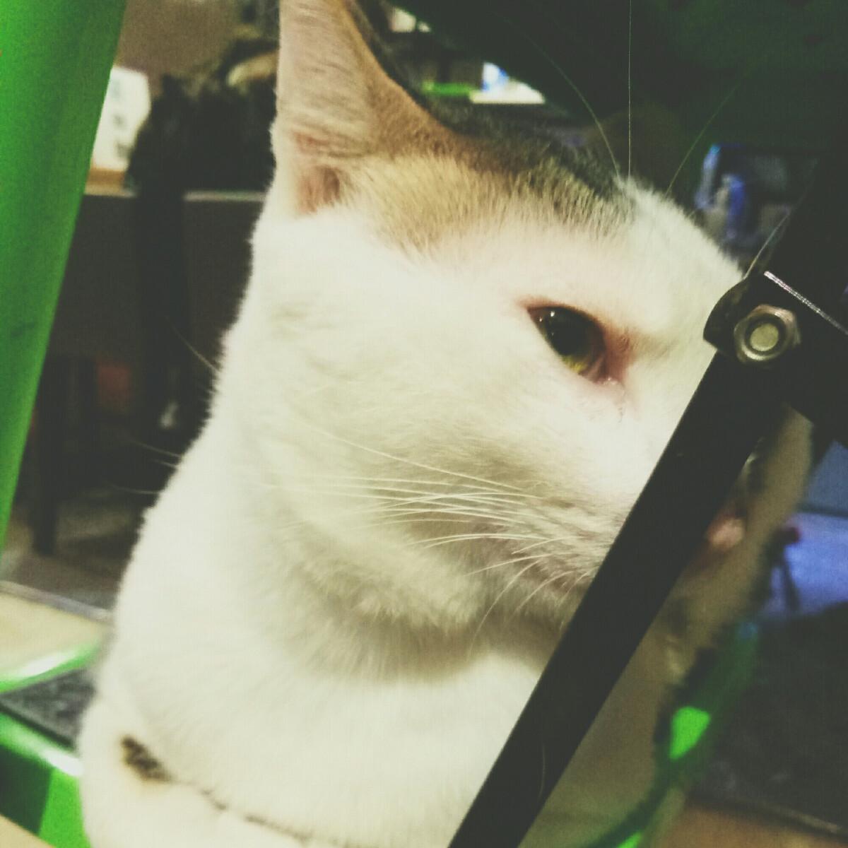 在咖啡店看到这只高冷猫,现在就成了我的头像,(魅族手机拍