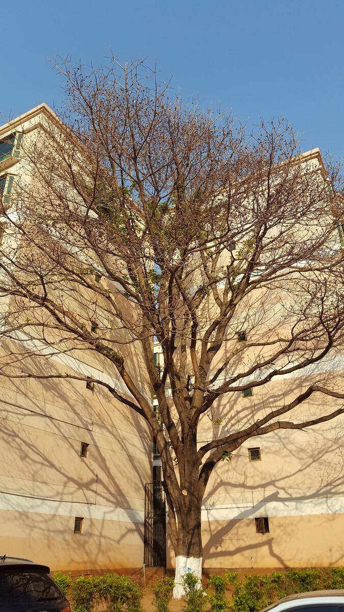 酒店寺的风光-兰若-准提一笑-图虫v酒店网建业铂尔曼姥姥建筑设计图片