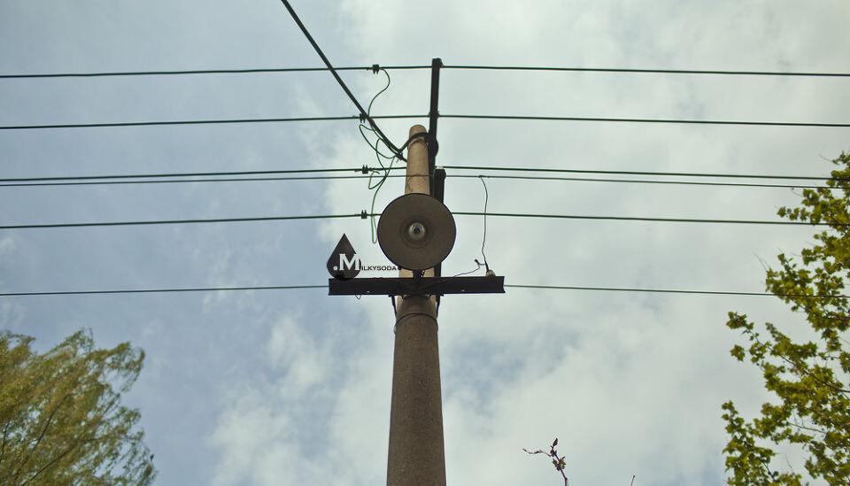 电线杆上木有小鸟图片