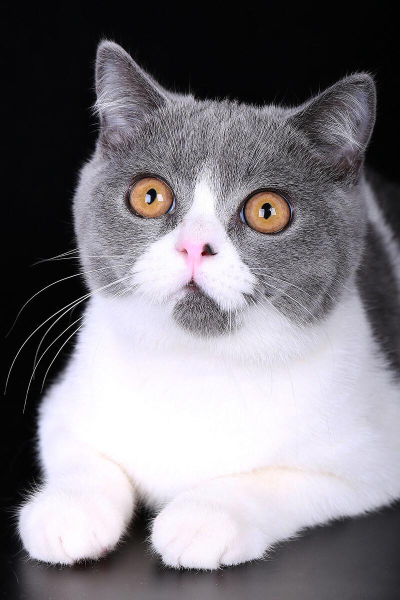 cat - hsu1025 - 图虫网 - 优质摄影师交流社区