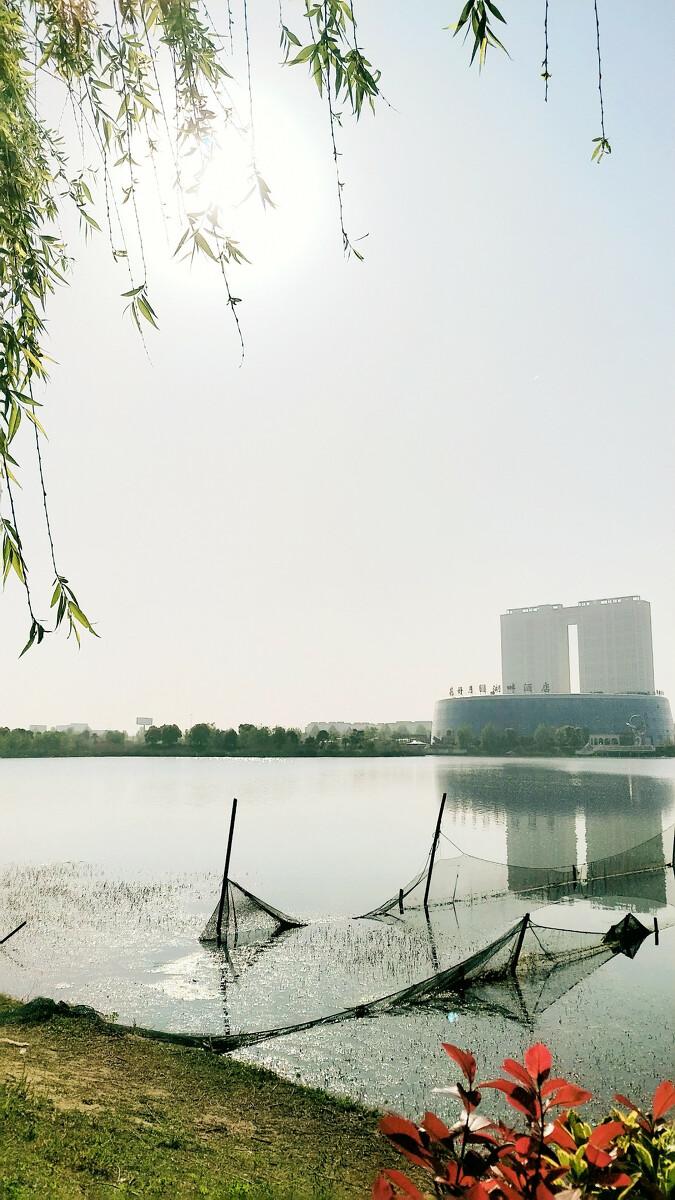 海安七星湖生态园的早晨(手机摄影)