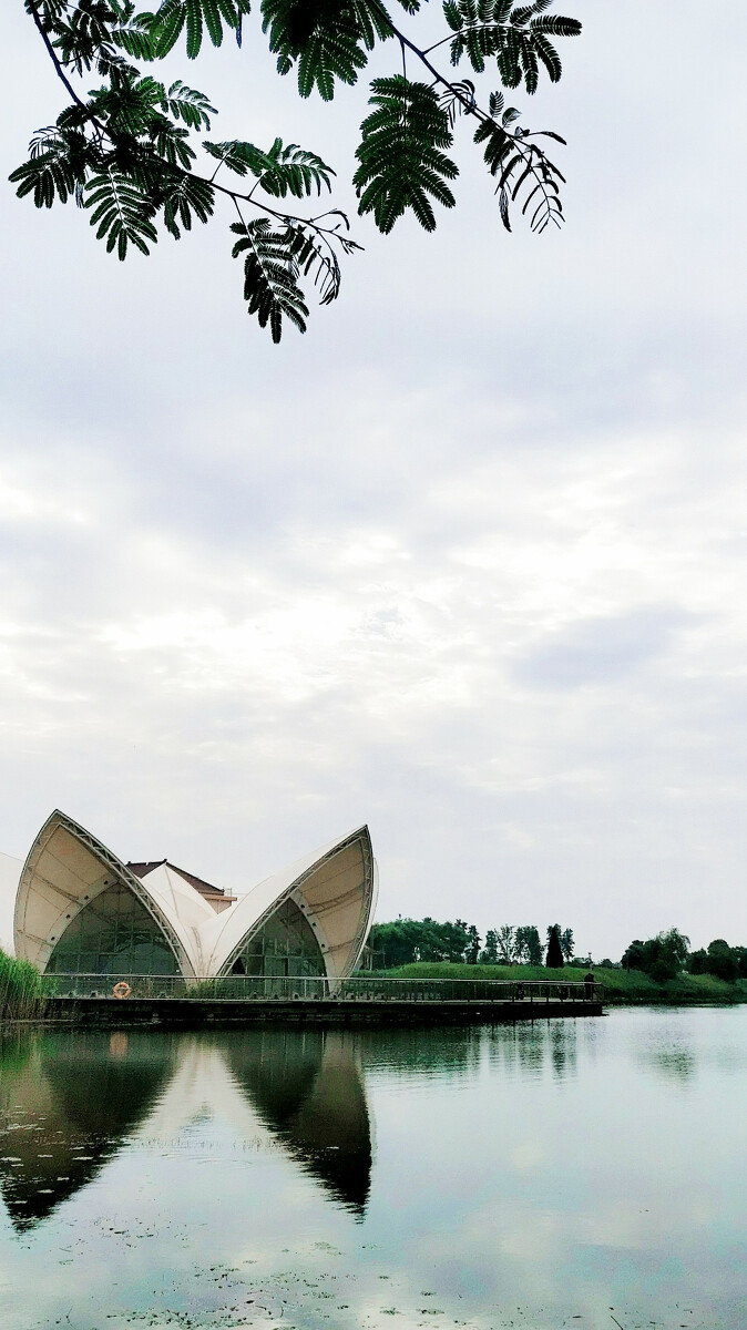 春去夏犹清!-海安县七星湖生态公园(手机摄影)