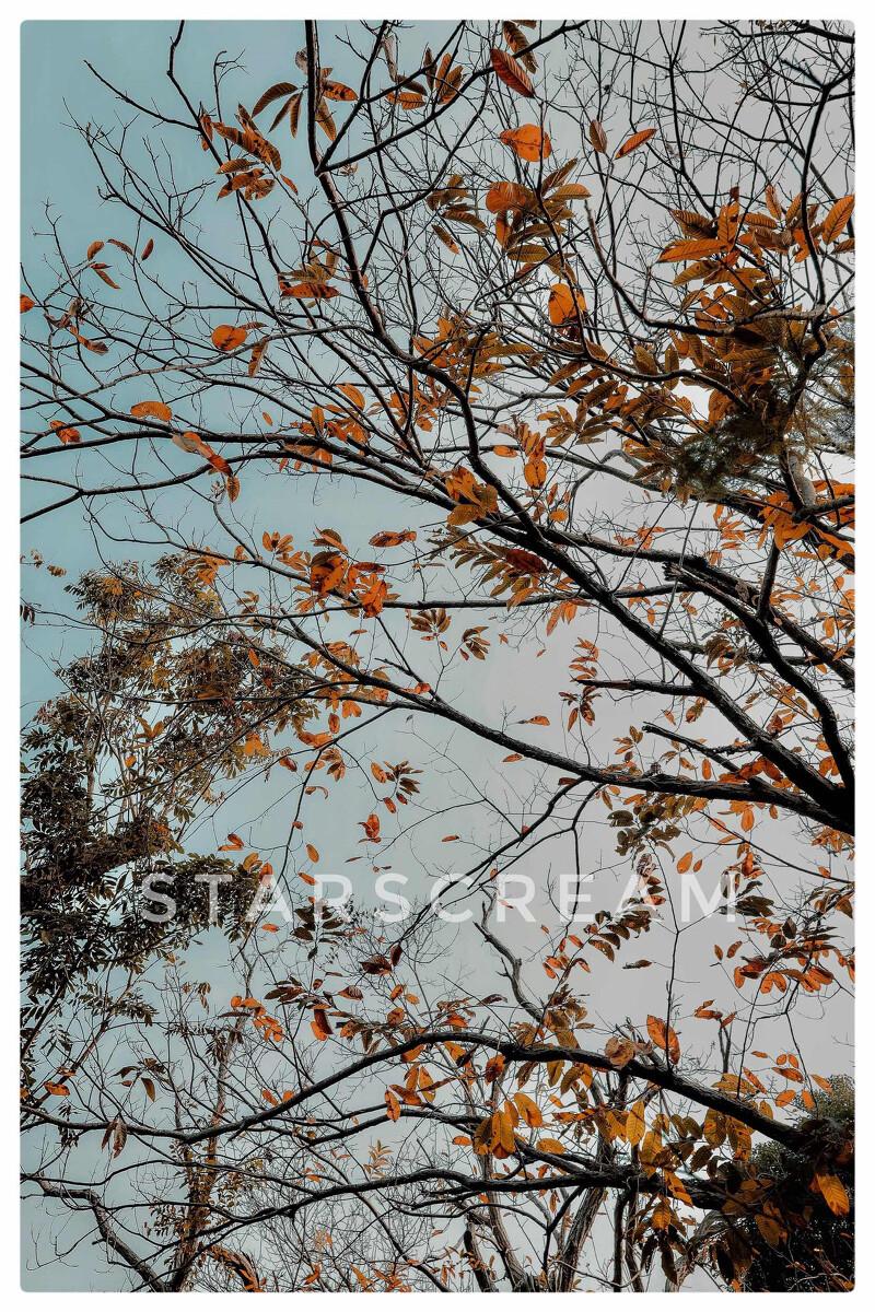 青南宁兰园-佳,秀山-兰若下的月光寺-图虫cad条绘制两线怎么图片