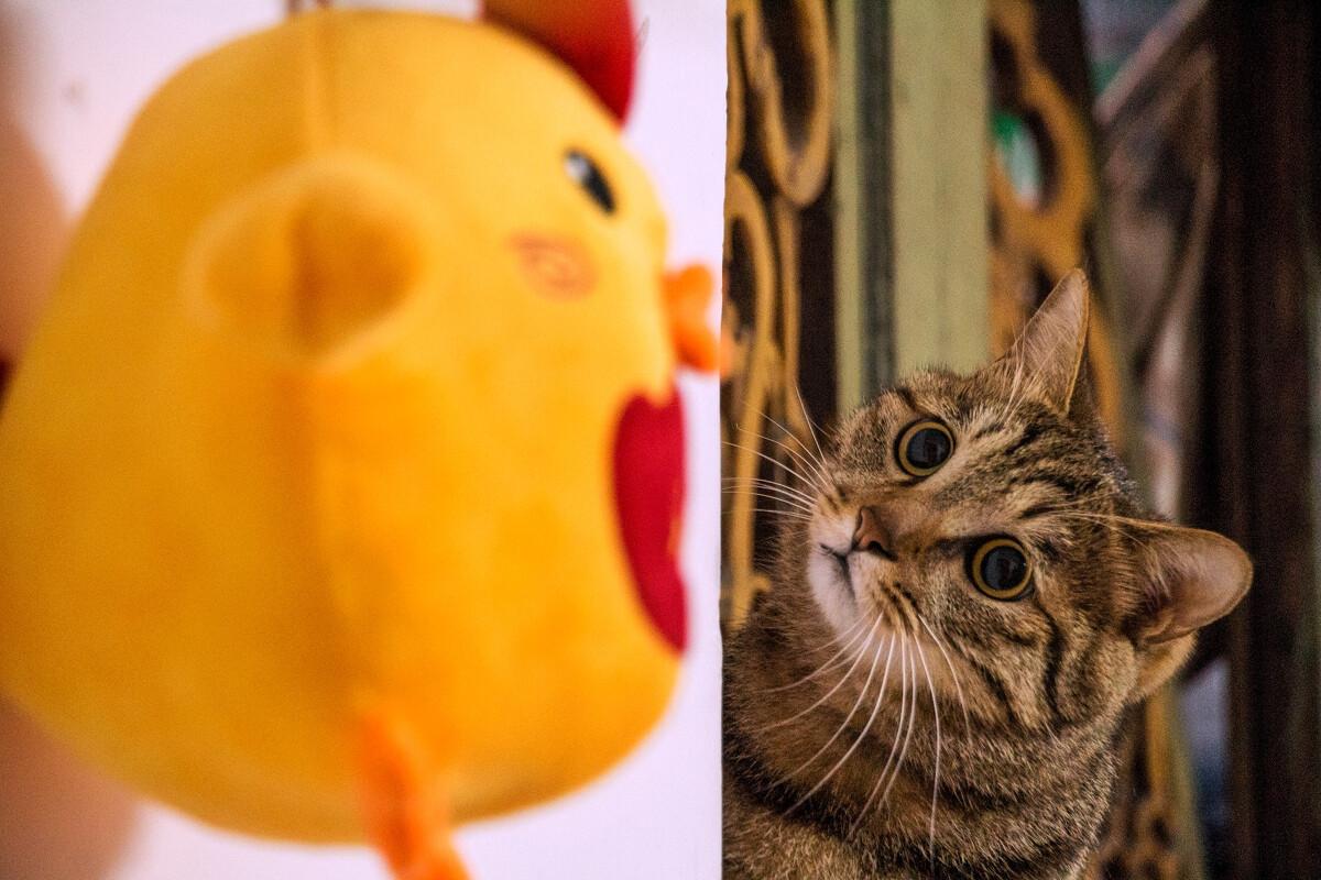 大鸡吧淫水_这是大鸡吧?