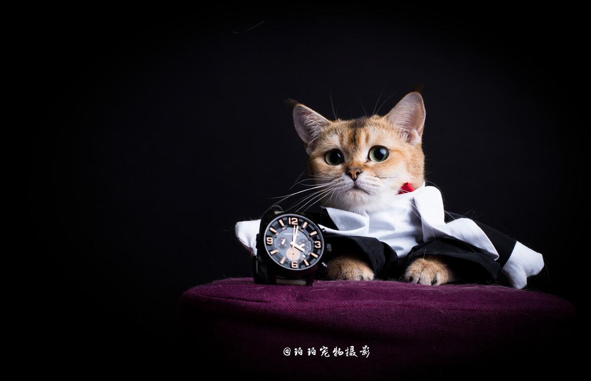 壁纸 动漫 动物 卡通 漫画 猫 猫咪 头像 小猫 桌面 1200_775