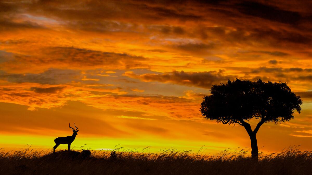 夕阳下的非洲大草原才是世界最美的风景,运气若好遇到动物