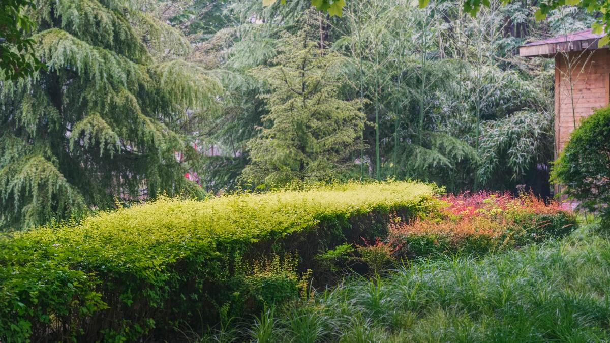 早上又下了小雨,天空依然阴沉,浓密树丛中一抹亮色惹眼图片