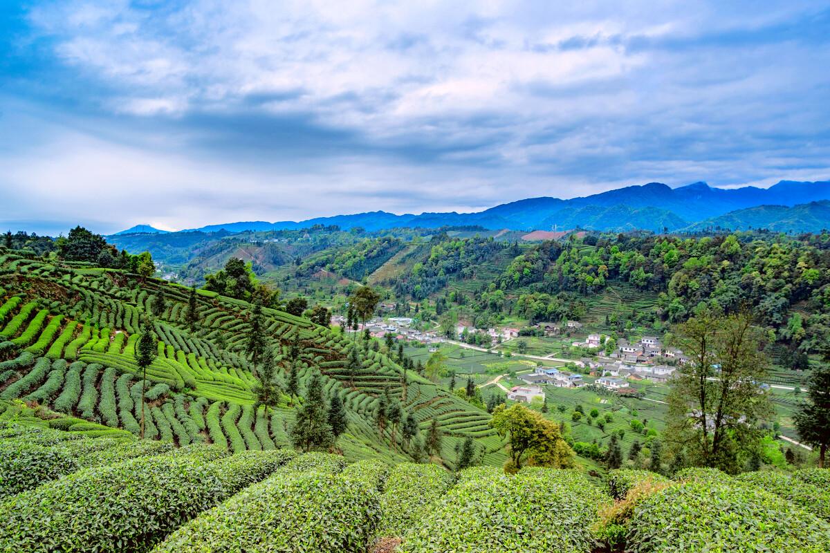 《人像》分别拍摄于成都市龙泉山,新津县紫竹林和岷山图片