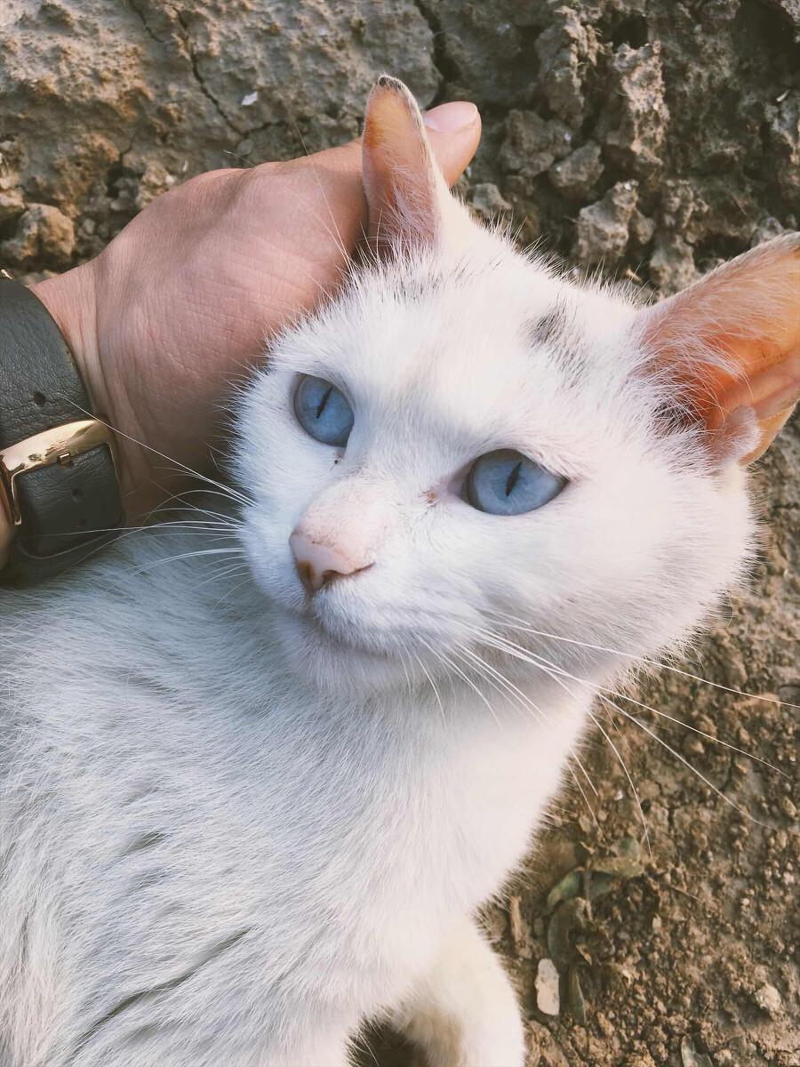 蓝眼睛咪咪