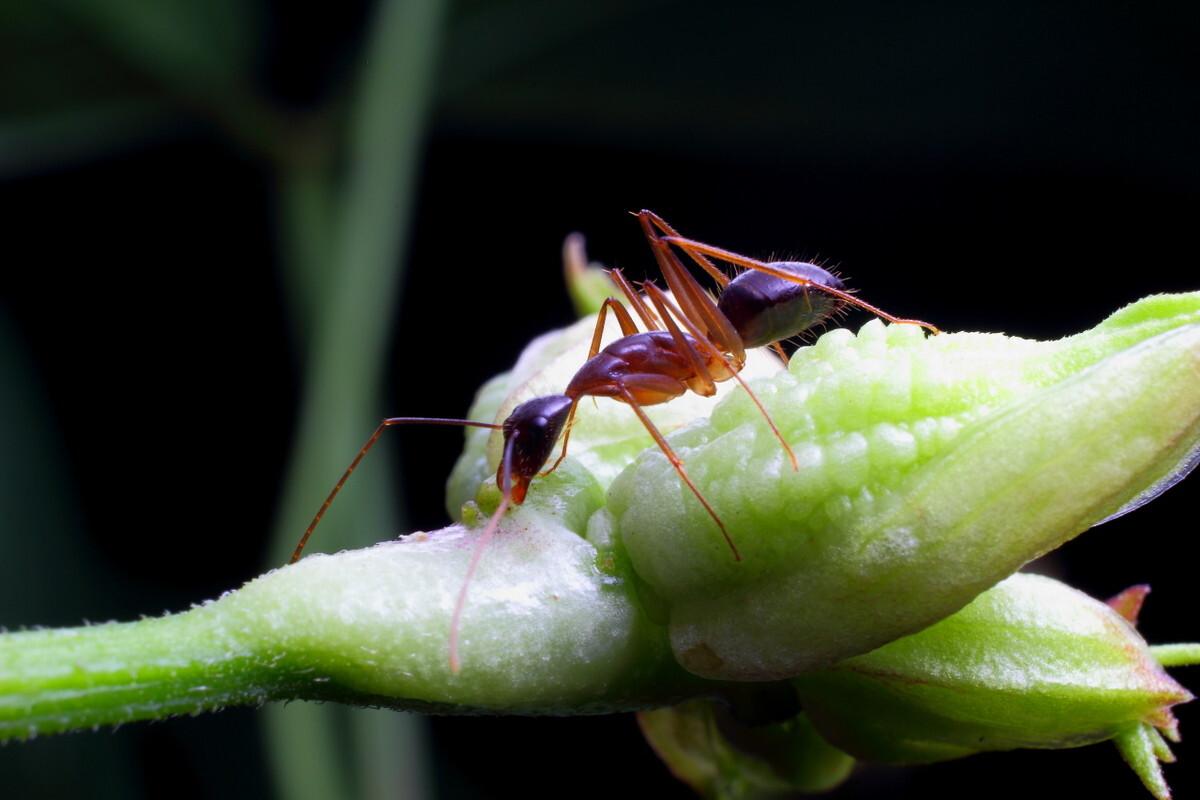 微距蚂蚁一组室内去油烟驱除苍蝇图片