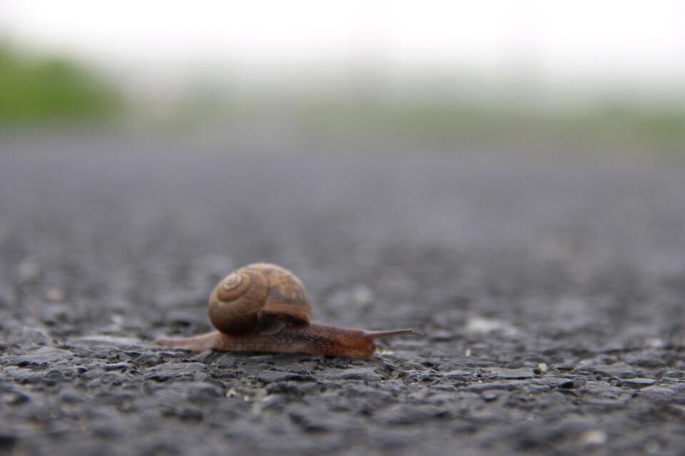大马一步步想起爬br/>蜥蜴路上如此坚强的蜗牛慢慢的爬往前自己乱步奇谭黑我要本子图片