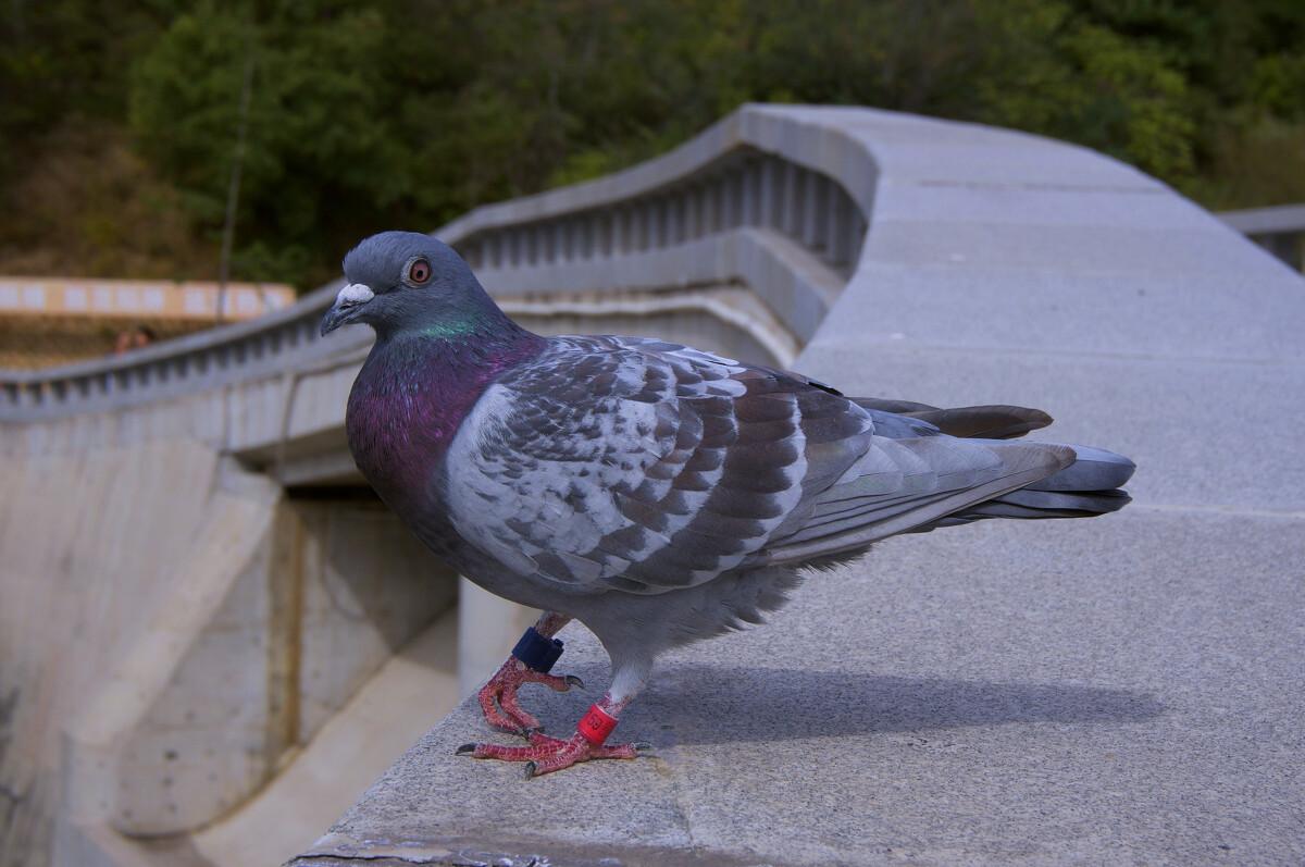 鸽子鸽动物鸟蜜蜂1200_797哪种杀虫刹可以驱鸟类图片