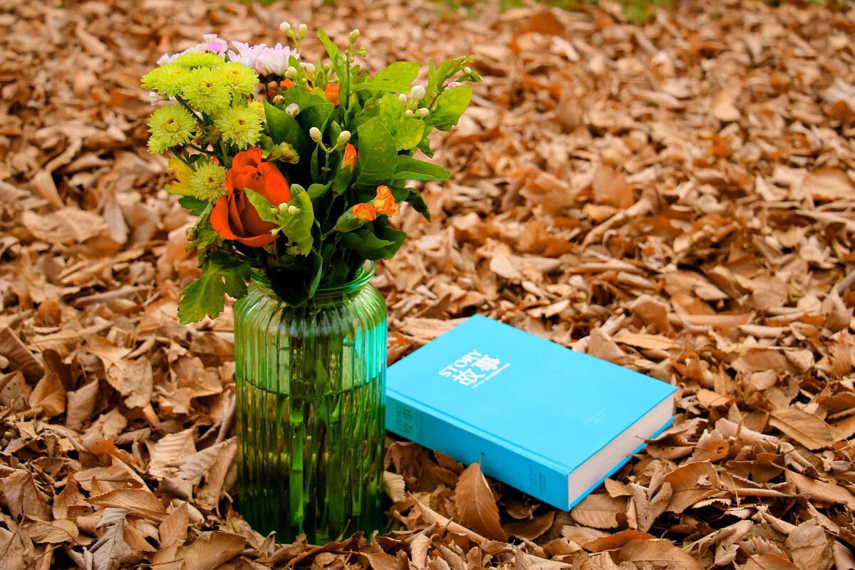 书籍 鲜花 小树林图片