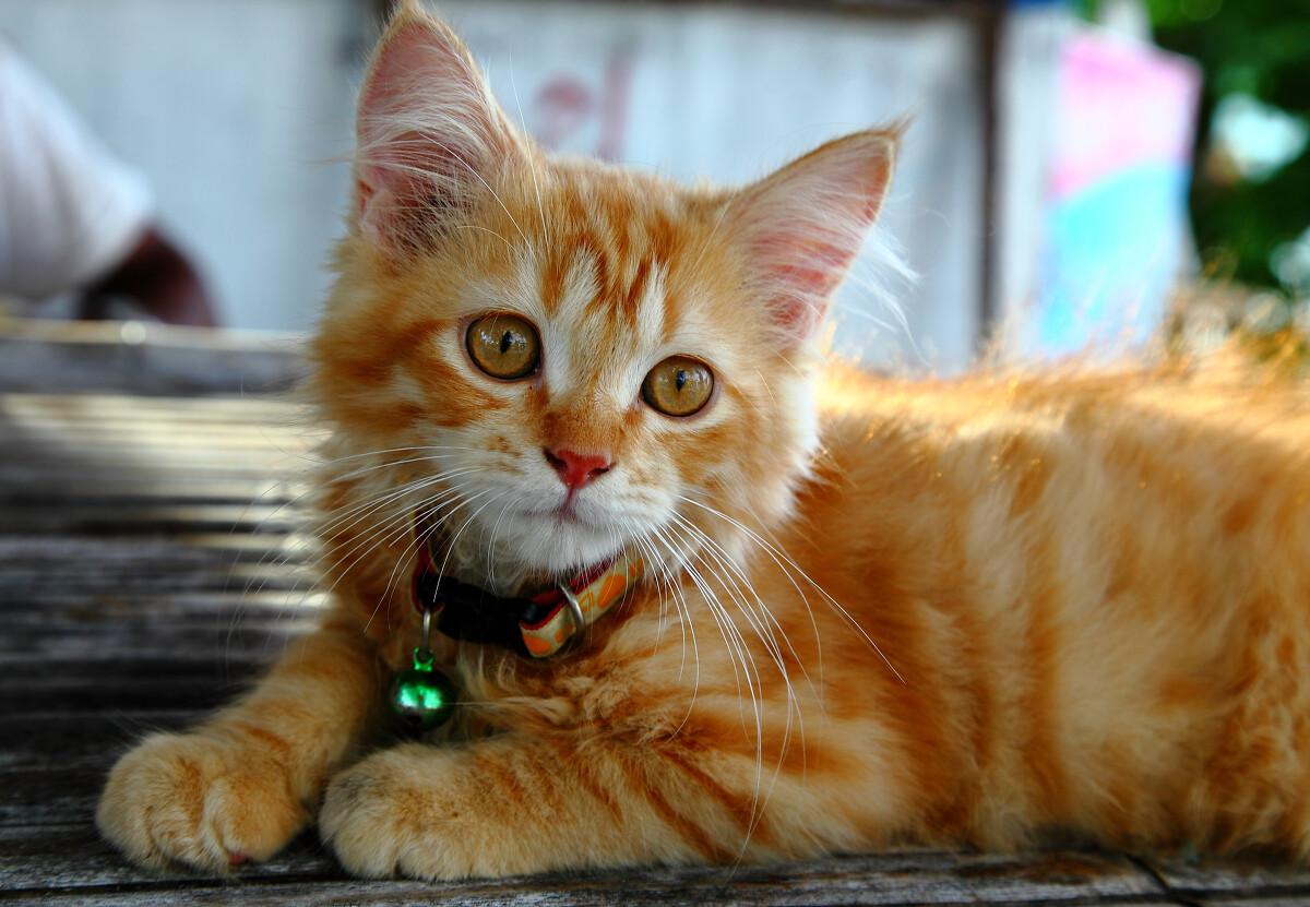 萌猫 br /> 在pp岛海边发现的的一只小猫,无故的眼神萌死人了