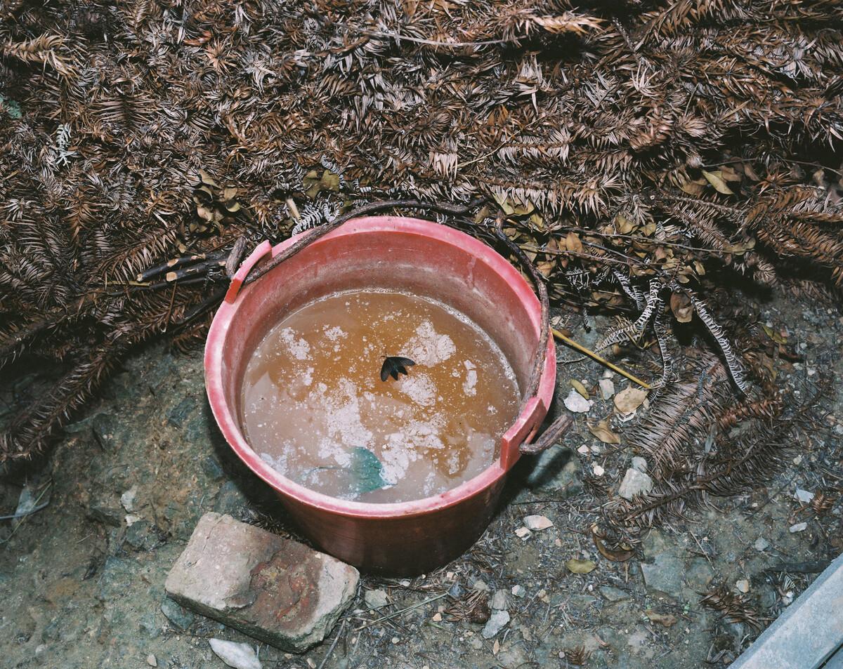 2014年,被淹没在尿桶里的蝴蝶,村民岁新建了卫生间,但还是保留在户外用尿桶储尿用以浇灌菜园的习惯。Mamiya 7II + 85/4,柯达120负片。