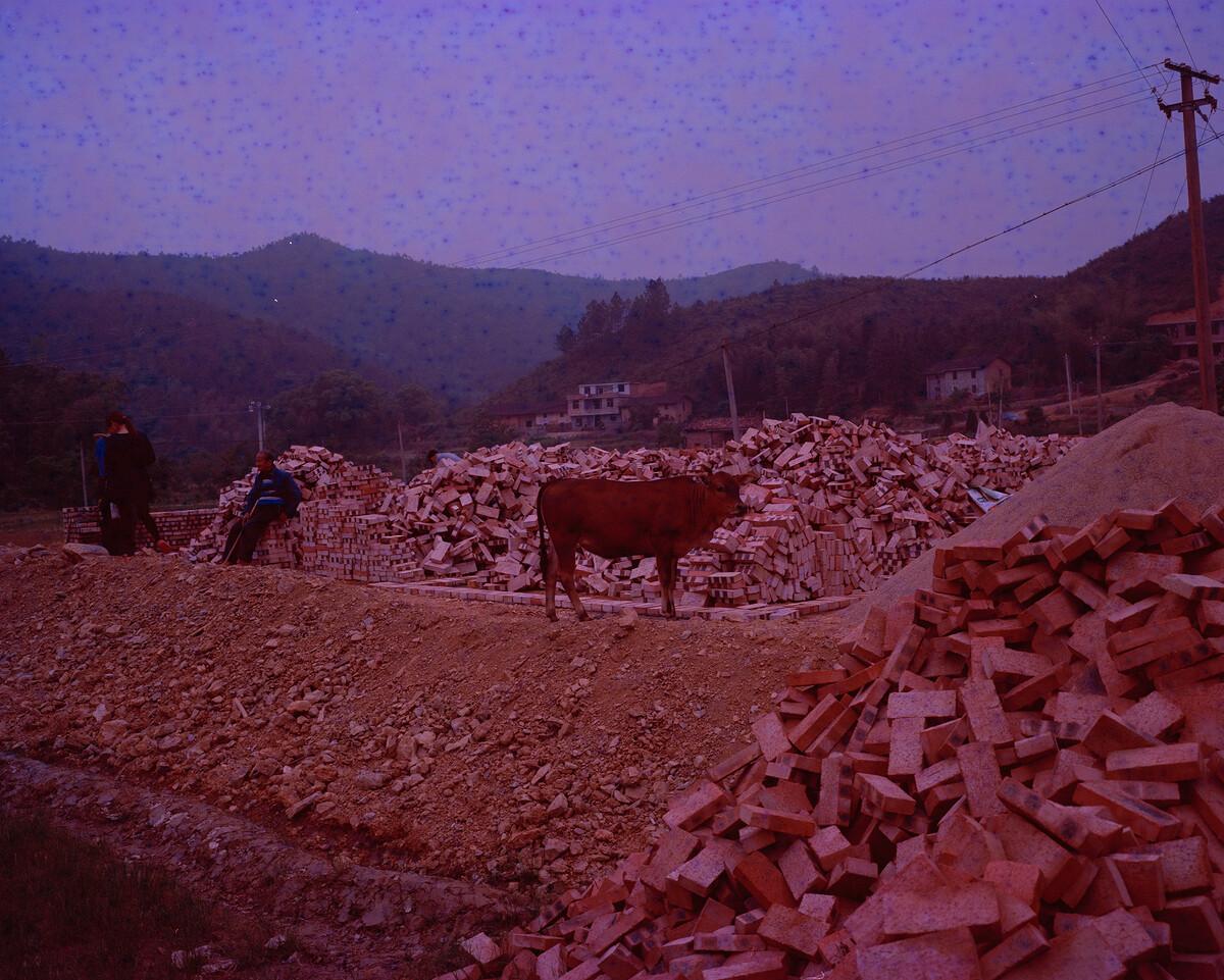 2015年,站在新地基上的耕牛。Mamiya 7II + 85/4,过期柯达120负片。