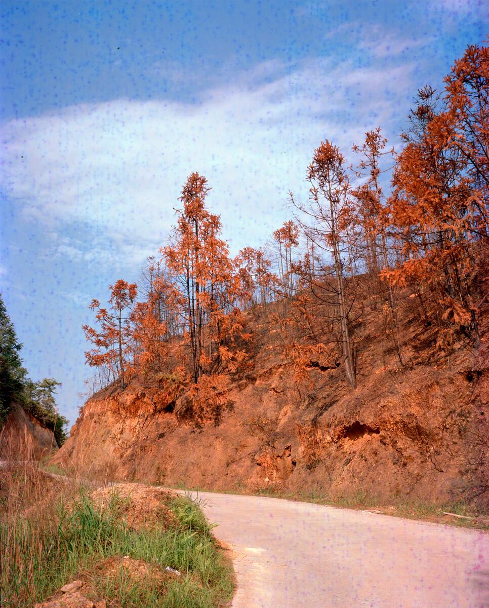 2015年,被山火烧过的山。Mamiya 7II + 85/4,过期柯达120负片。