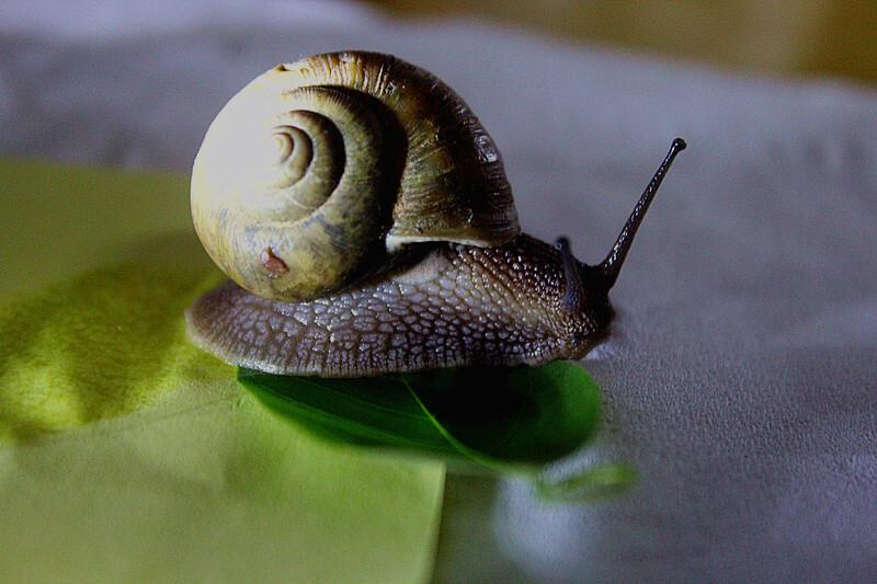作文蜜蜂蜗牛聪明的先生图片