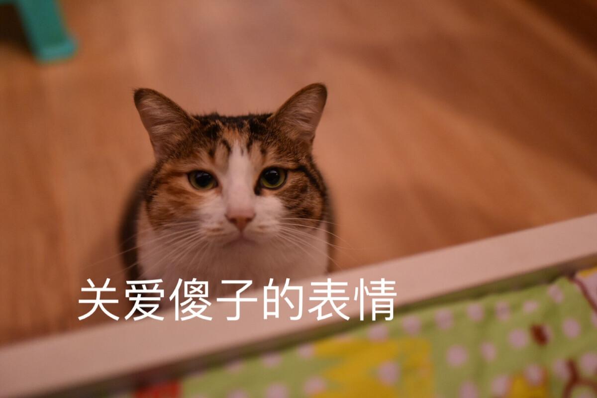 表情榴莲之主签到的仙境包群搞QQ恶