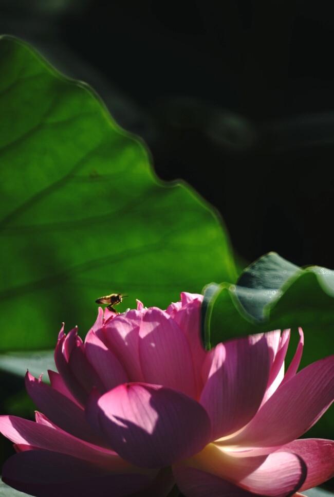 光与影的魅力~~~孤单时,仍要守护心中的思念,有阴影的地方,必定有