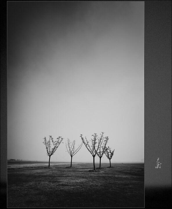 五株树<br />