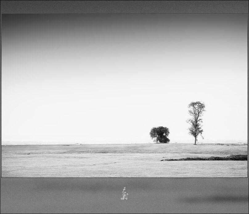 两株树<br />