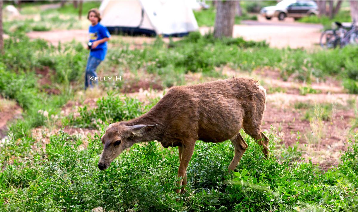 草屁股_一阵狂拍, 小鹿好像早就习惯了被人拍, 很淡定的吃了草, 拍拍屁股慢