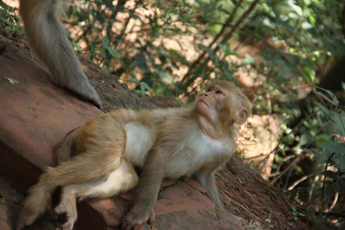 丰满骚b_贵妃猴 br /> 骚b小猴子