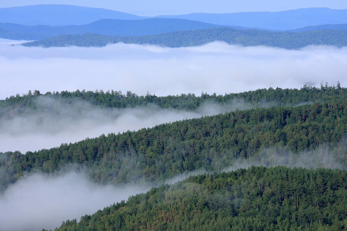 原始森林的晨雾 日出