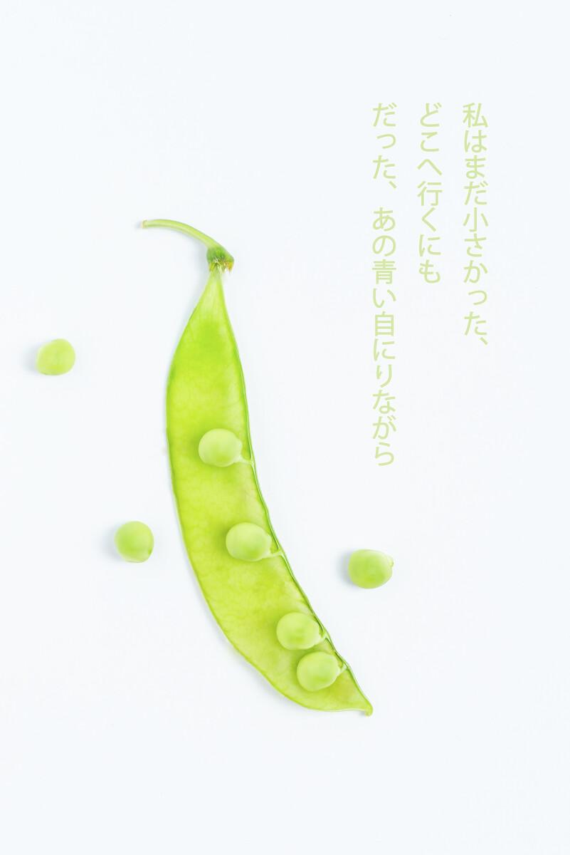 初夏的豆荚