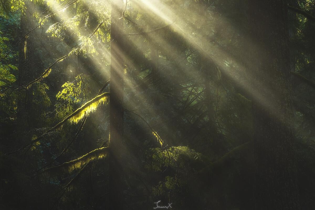 当阳光穿透那树梢,你心里悸动了吗?