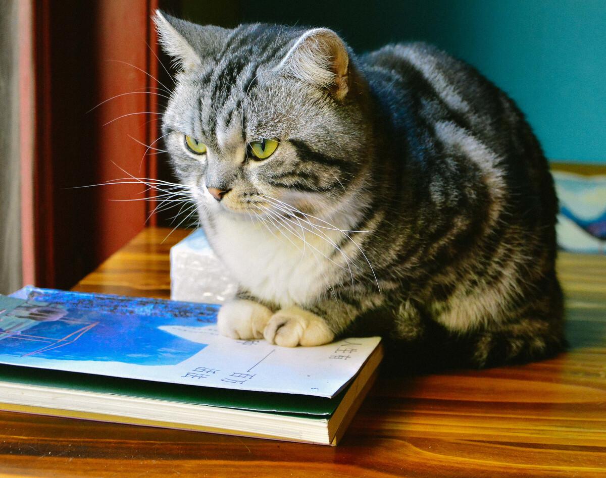 高冷的猫咪手机壁纸-猫咪卡通手机壁纸-猫咪手机锁屏