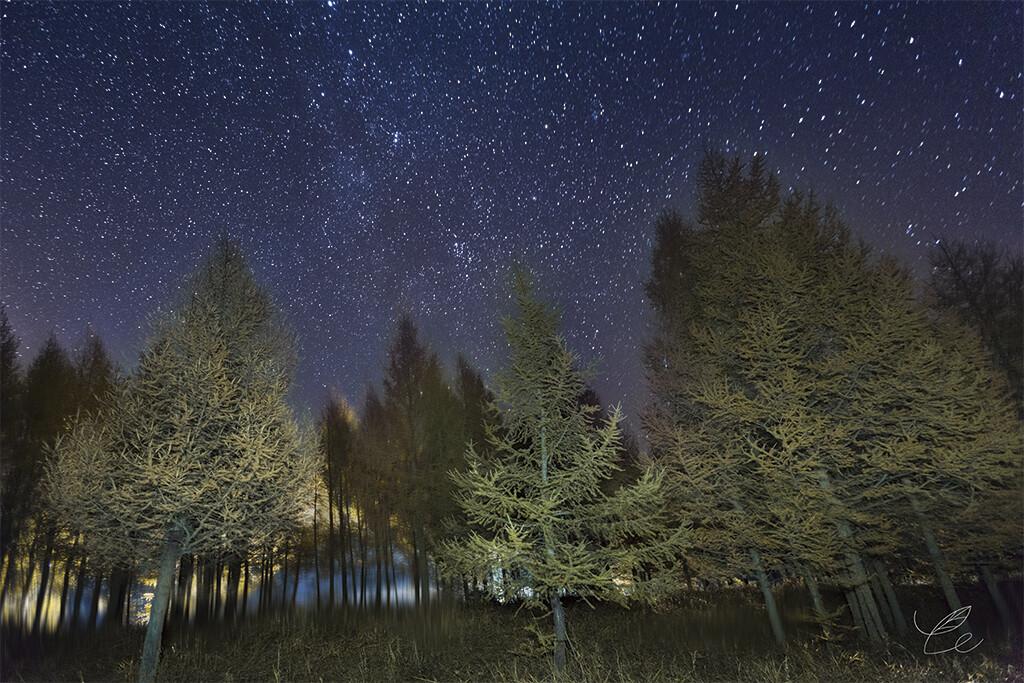 森林星空图片