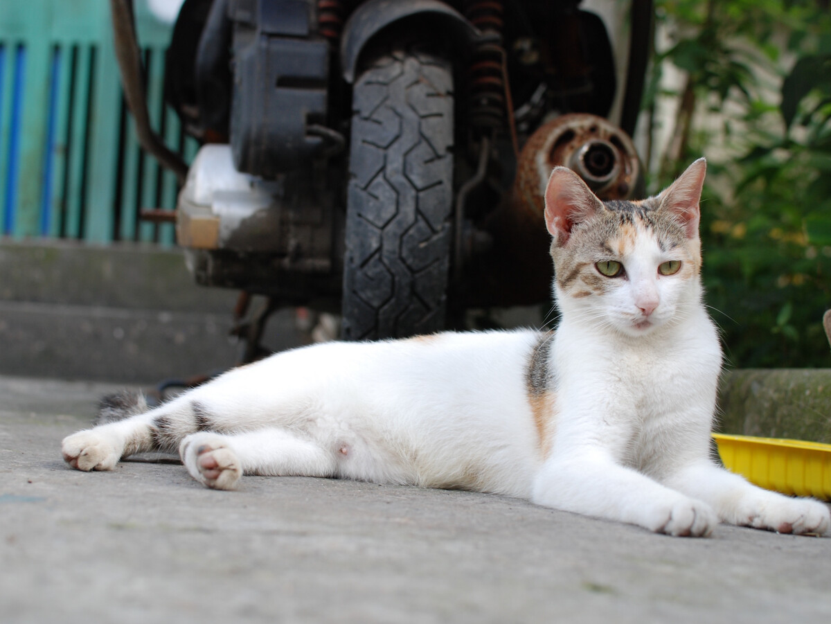 三色猫_三色猫
