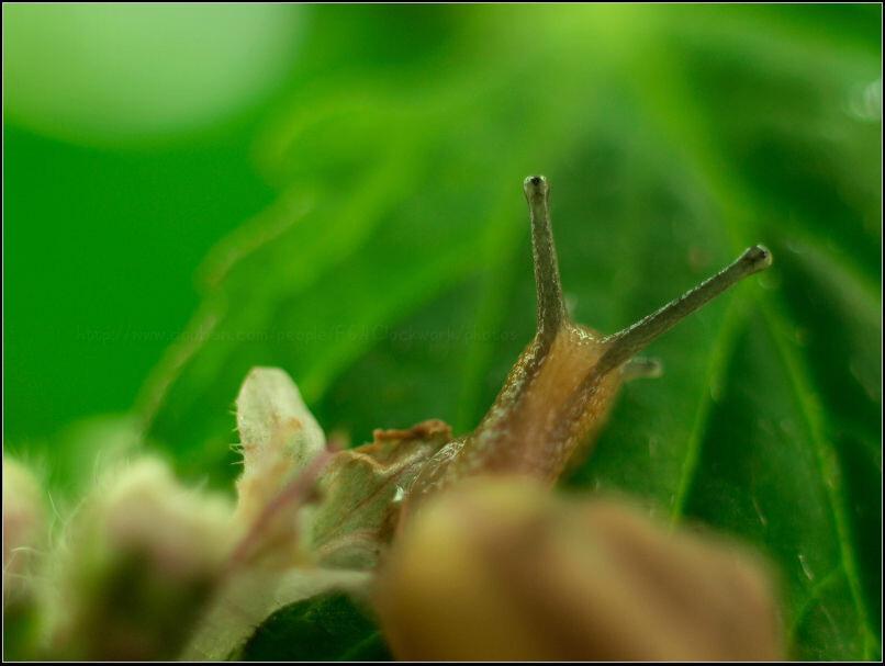 向往光明的蜗牛图片