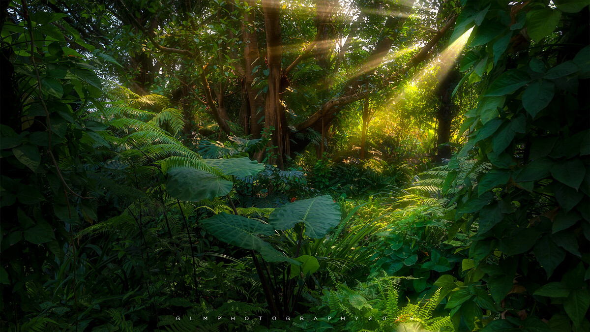 全息光效粒子森林童话绿野仙踪树屋话剧演出舞蹈led大图片