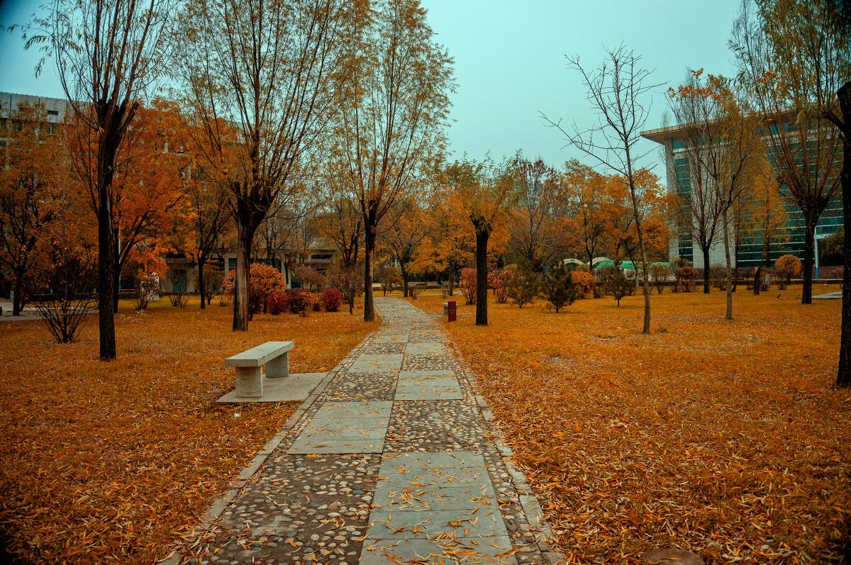 校园小道图片