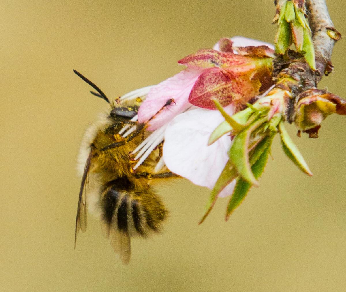小动物采蜜忙-佳,恐龙,北京-Adolph扬关于v动物蜜蜂的手机游戏图片