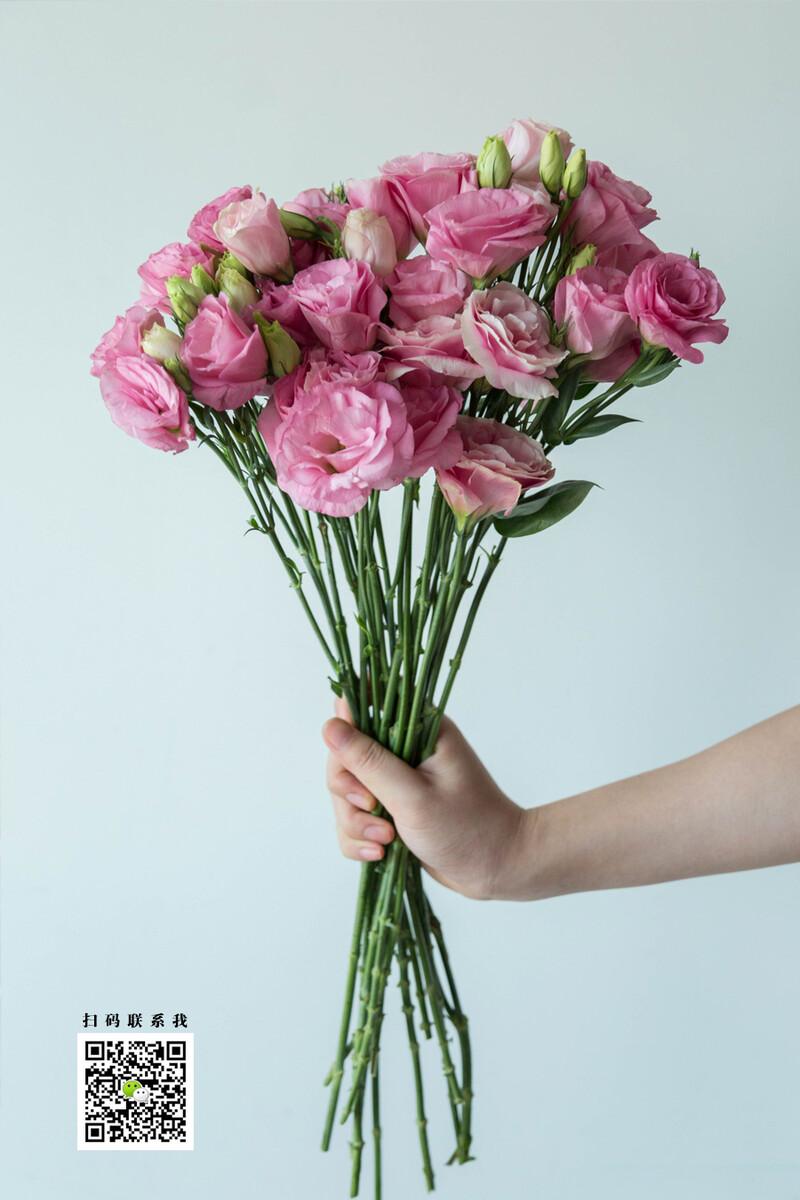 无刺玫瑰+