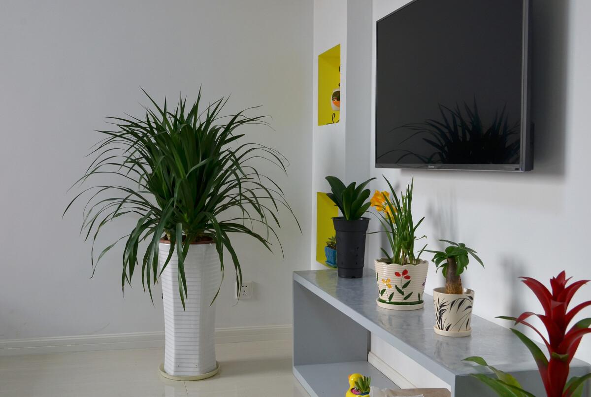 室内绿色植物摆放图图片