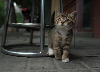 街边小萌猫