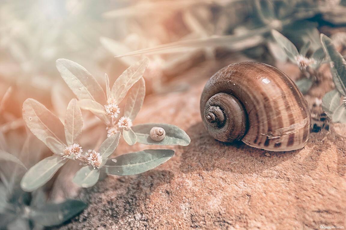 总有一天,你会与曾经的自己相遇。也许感慨万千,也许相视无言。梦想,就是脚下的路,从你决定出发的那一刻起,你就已经在梦想的路上,即使,终其一生背负沉重的壳。