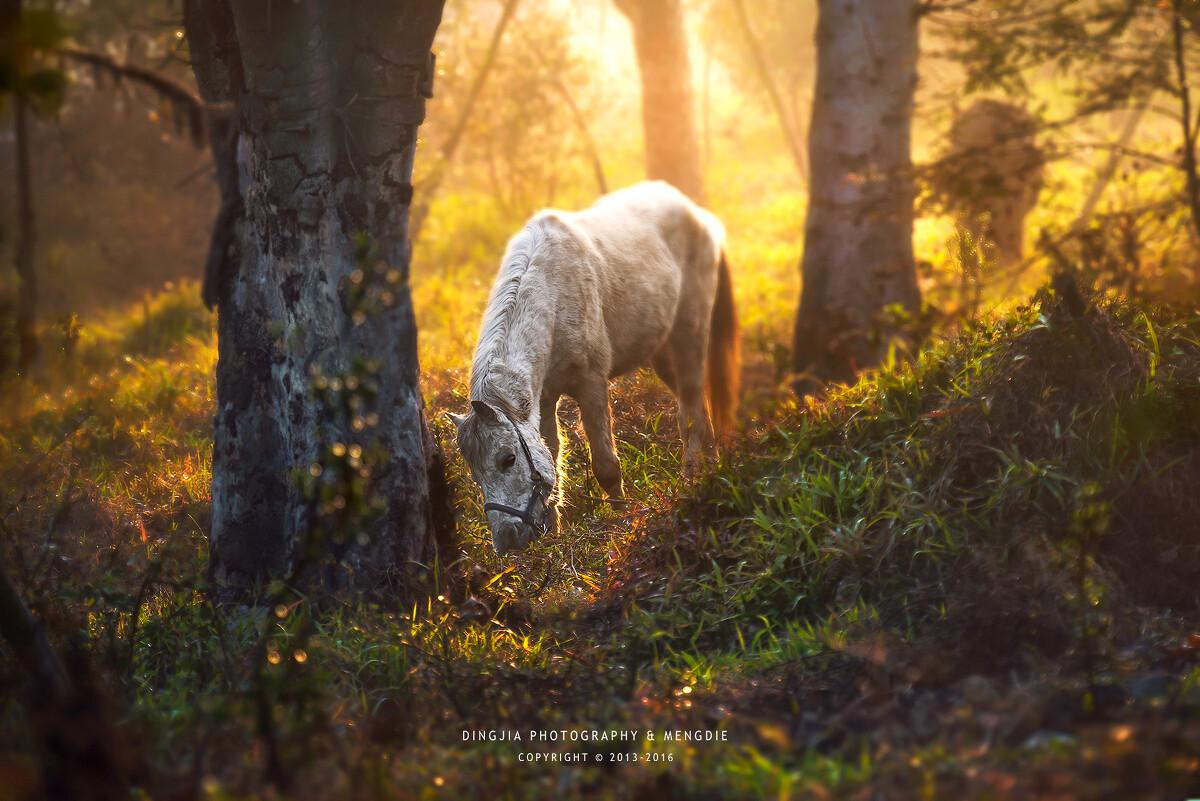 梦见有人骑着白马 梦见别人骑白马是什么兆头