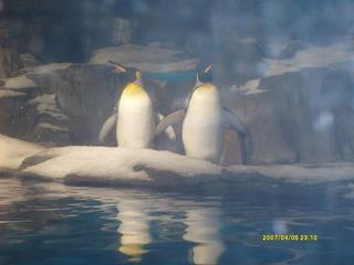 南极企鹅.JPG