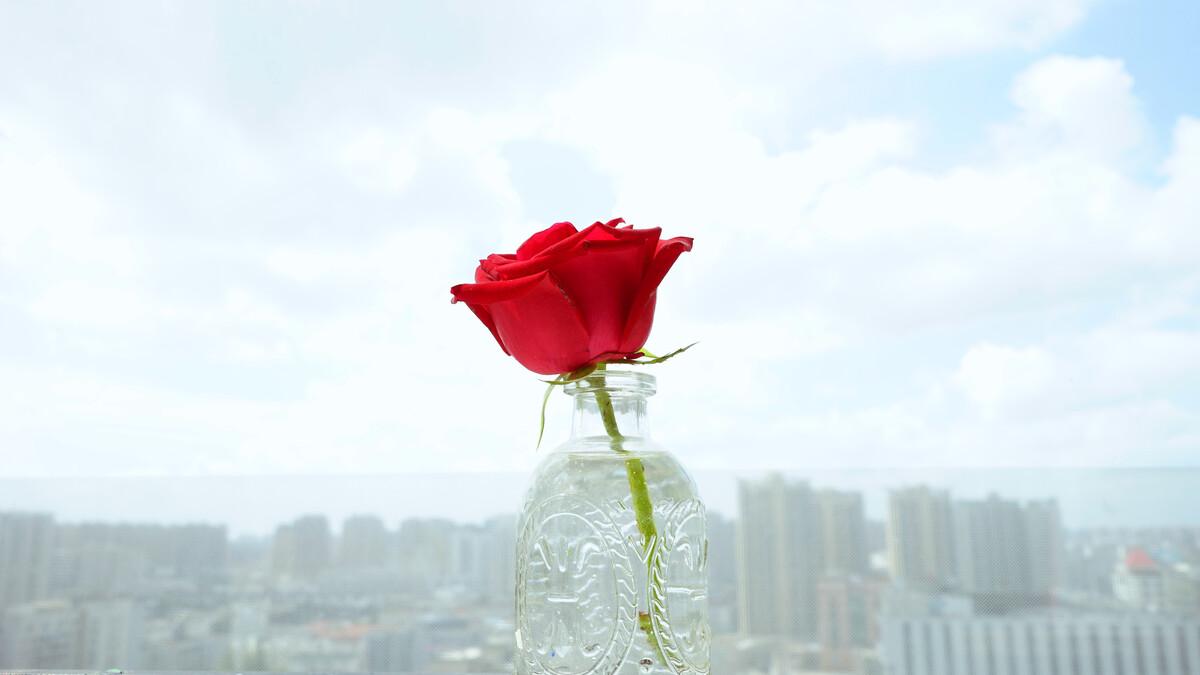 花非花,俯视盛世浮华,昂首云淡风轻