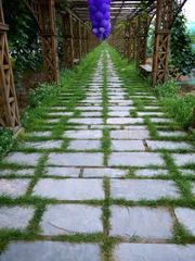 葡萄架之路